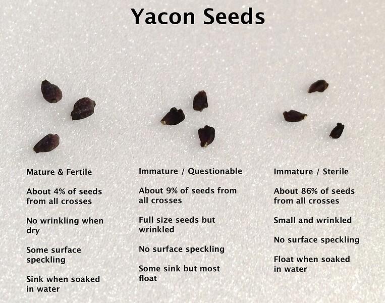 yacon-seeds.jpg